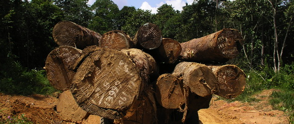 Erdőirtás - Két másodpercenként kiirtanak egy focipályányi erdőt