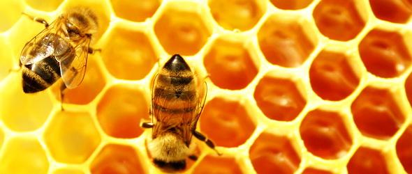 A méhek után négy évvel az emberiségnek is vége
