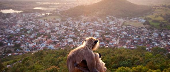 A városok jövője – Egyre fontosabb a biodiverzitás