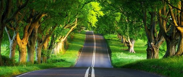 zöld út