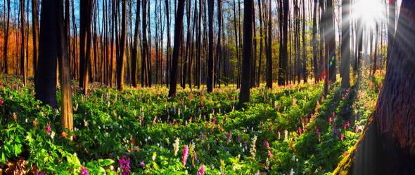 A növények kilégzése erősíti az immunrendszert