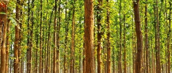 Egymaga telepített erdőt egy indiai férfi