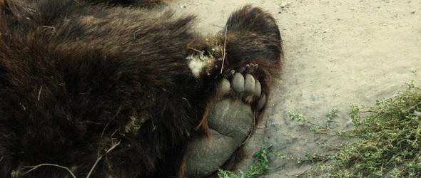 Szerelemvonat medvebocs módra - VIDEÓ