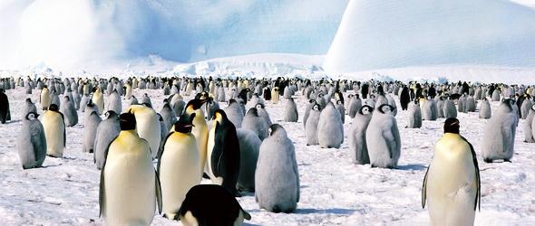 Kizöldülhet az Antarktisz a klímaváltozás miatt