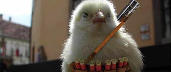 Csirkehadsereg védi Kínát a sáskajárástól
