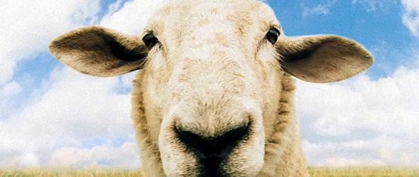 A bárányok lehallgatnak - SMS-t ír a pásztornak vész esetén