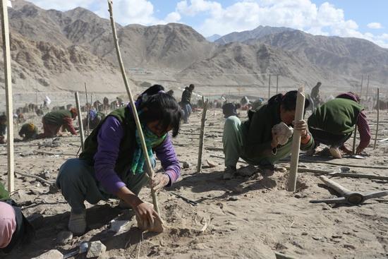 Fásítási világrekord Indiában: Közel 100 ezer fát ültettek