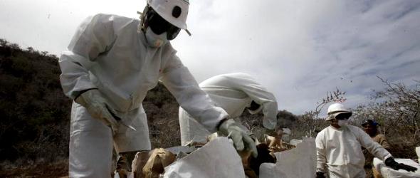 Galápagos a galápagosiaké! – Patkányirtó akció indult