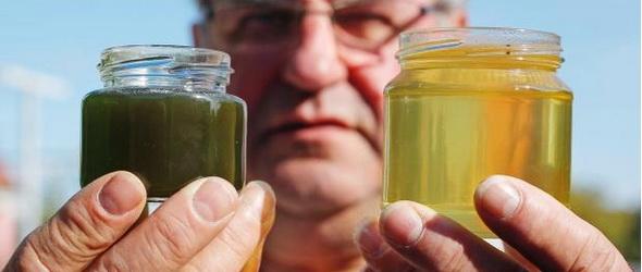 Kék és zöld méz – Színes mézet készítettek Elzászban a méhek