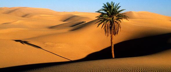 Zöldellő élet mesterségesen a sivatagban