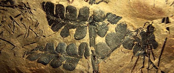 Háromszázmillió éves fosszílizálódott erdőt fedeztek fel