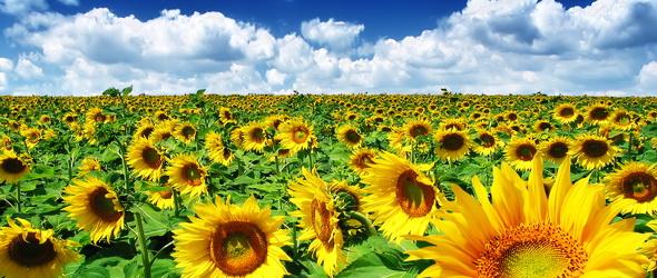 Jóval korábban virágzanak a növények a globális felmelegedés miatt