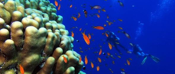 Napernyőkkel védhetik a korallzátonyokat