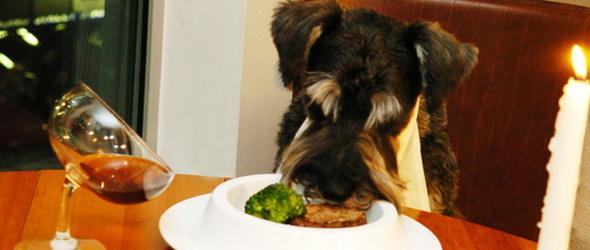 A kecske is jóllakik, a káposzta is megmarad - elindult a Pet it