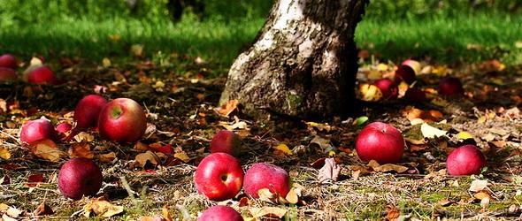 Termő gyümölcsfákkal ültetnek be egy közparkot