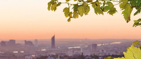 A fenntarthatóságra törekednek Bécs borászai
