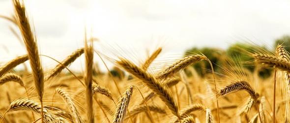 Búzatáblába gyümölcsöst! - Harc az agrársivatagok ellen