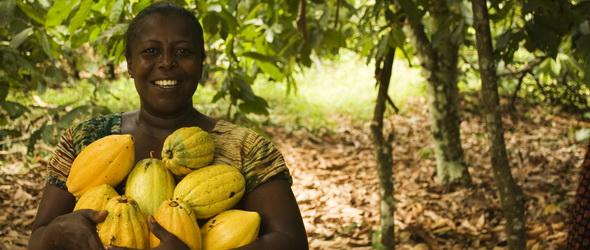 Fenntartható kakaótermesztés – 400 millió dolláros segítség