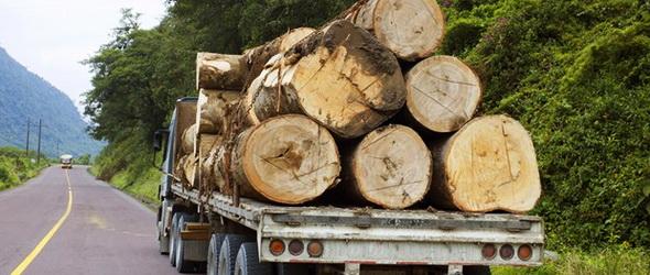 Fa-112 – Vésztelefonálnak a fák, miközben vágják őket