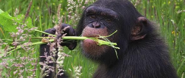 Öngyógyítás – Az állatoknál gyakoribb mint gondoltuk