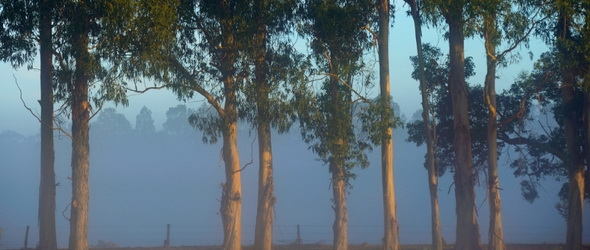 Időérzék - A fáknak is van belső órájuk!