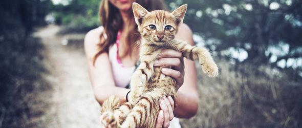 Állatkínzás, vagy segítség? - Internetes macskakölcsönző nyílt