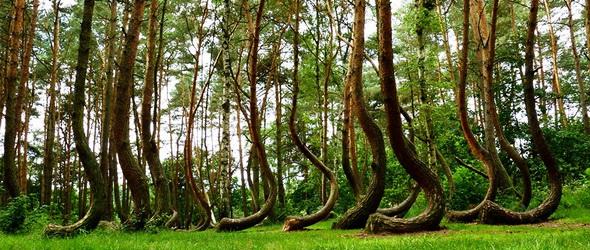 Örök rejtély – A lengyel görbe erdő