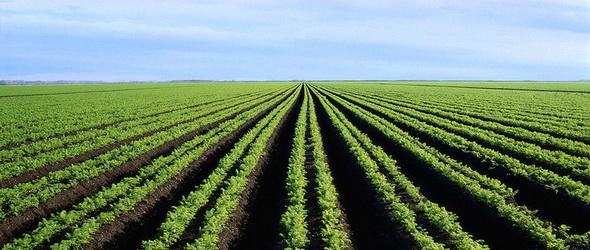 Újratervezés - Mégsem kap pénzt a Monsanto