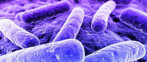 Génmódosított baktériumokkal készítettek bio-üzemanyagot