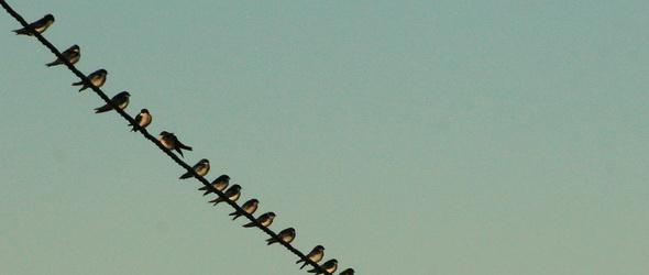 Vonuló és telelő madárfajok találkoznak a hideg miatt