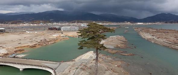 Terminátor: Visszaállították a cunamit egyedüliként túlélő, de később kivágott fát