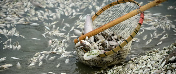 Lemérgeztek egy folyót, az összes hal kipusztult