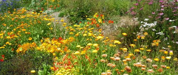 Gyógynövény – Hogyan lehet fenntarthatóan gyűjteni?
