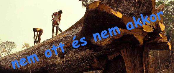 Álhír terjed - Nem vágták ki a Föld legidősebb fáját!