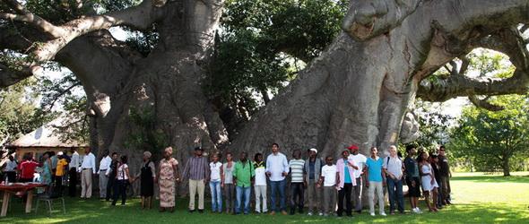 Akkora a 6000 éves fa, hogy belefért egy kocsma