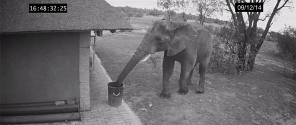 Kamu, vagy valós a legjófejebb elefántról szóló videó?