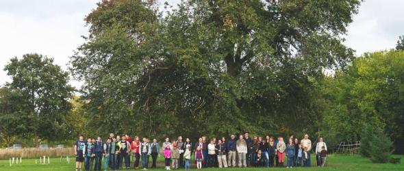 Második lett a magyar fa az európai Év Fája versenyen