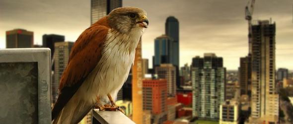 Urbanizáció vs. biodiverzitás – Monstre kutatás készült