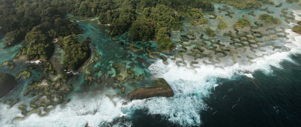 Magyar fejlesztésű mangrove-gátrendszer a tengerszint-emelkedés ellen
